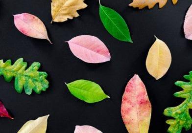 Παιχνίδι με τα φύλλα